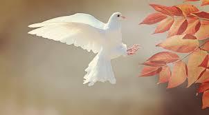 De persoon, de gaven en de vrucht van de HeiligeGeest